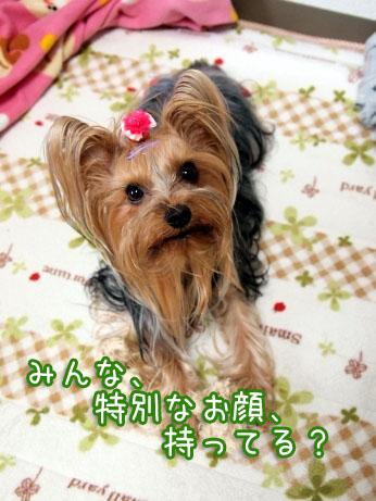 2_20100327195321.jpg