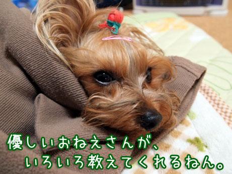2_20100330192339.jpg