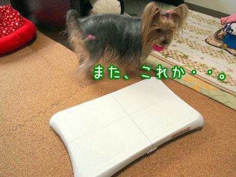 2_20100405192759.jpg
