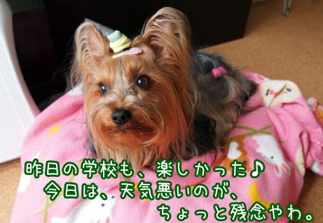 2_20100411142142.jpg