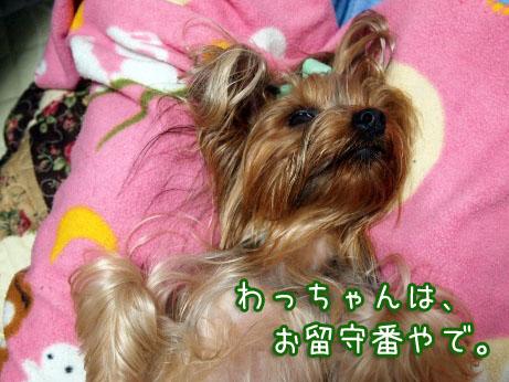 2_20100412210932.jpg