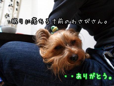 2_20100422201542.jpg
