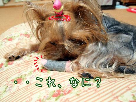 2_20100427194251.jpg