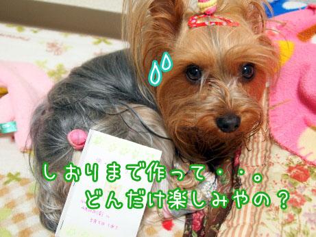 2_20100428193136.jpg