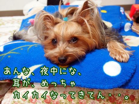 2_20100510191213.jpg