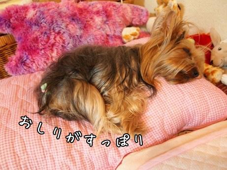 2_20100519105956.jpg