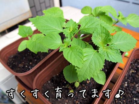 2_20100520195330.jpg