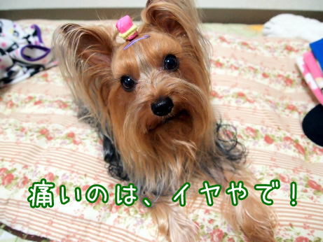 2_20100528204053.jpg