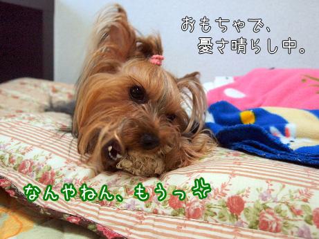 2_20100604173552.jpg