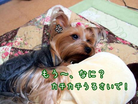 2_20100608181101.jpg