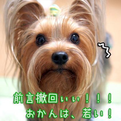 2_20100706190956.jpg