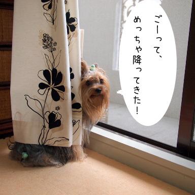 2_20100714191343.jpg