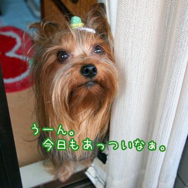 2_20100723195255.jpg