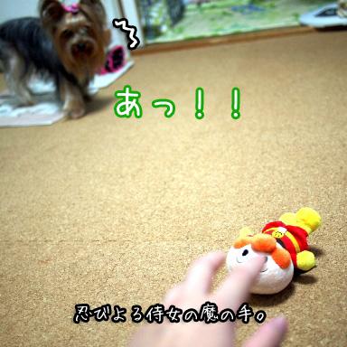 2_20100801194139.jpg