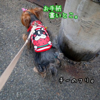 2_20100805193518.jpg