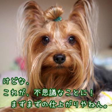 2_20100811190839.jpg