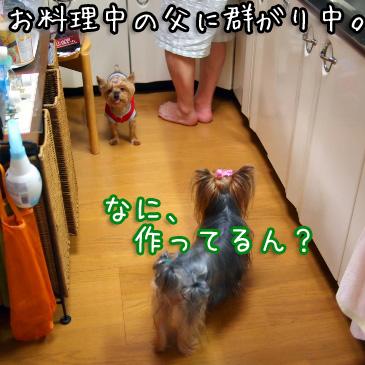 2_20100824180932.jpg