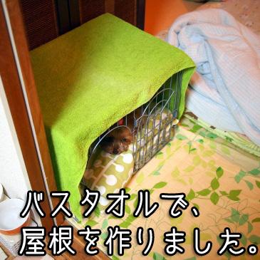 2_20100827205936.jpg