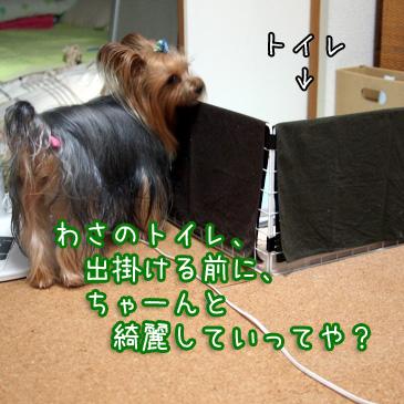 2_20100929193259.jpg