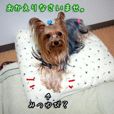 2_20101011192354.jpg