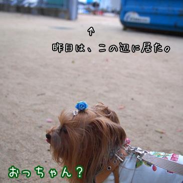 2_20101015192826.jpg