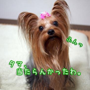 2_20101018175120.jpg