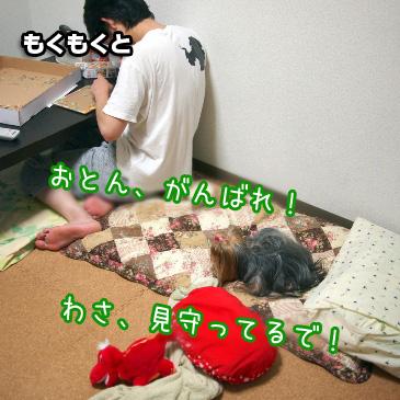 2_20101025190757.jpg