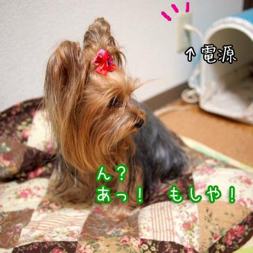 2_20101029191321.jpg