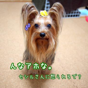 2_20101108164021.jpg