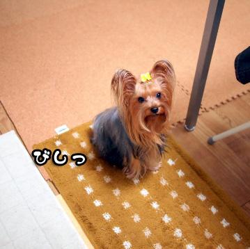 2_20101109195632.jpg