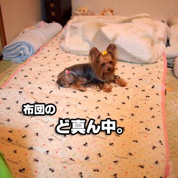 2_20101111192603.jpg