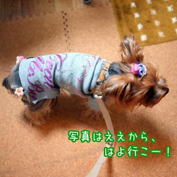 2_20101114190718.jpg