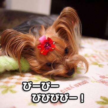 2_20101118190915.jpg