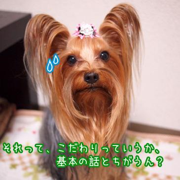 2_20101126193908.jpg