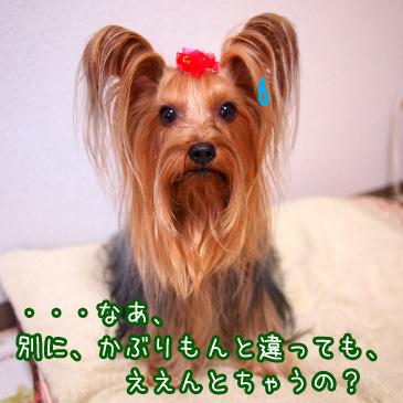 2_20101201192709.jpg
