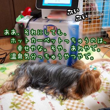 2_20101212202310.jpg