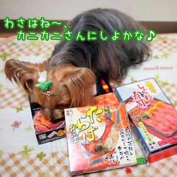 2_20101213200945.jpg