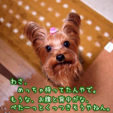 2_20101221212537.jpg