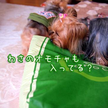 2_20110104200357.jpg