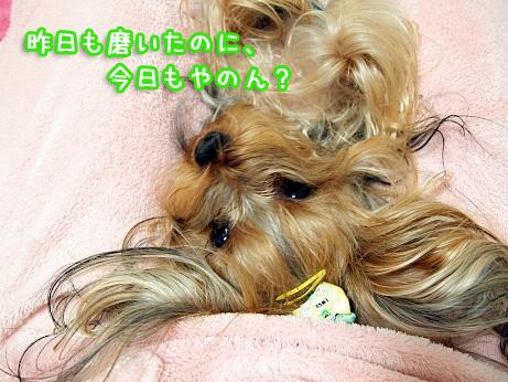 3_20100205195056.jpg