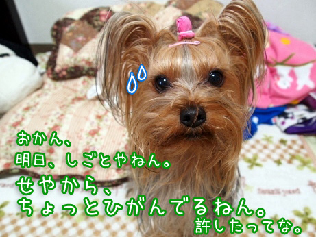 3_20100210173136.jpg