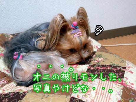 3_20100218171701.jpg