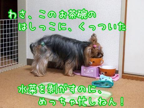 3_20100227192559.jpg