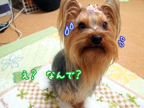 3_20100303190025.jpg