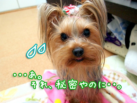 3_20100304174533.jpg