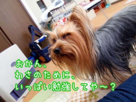 3_20100314161456.jpg