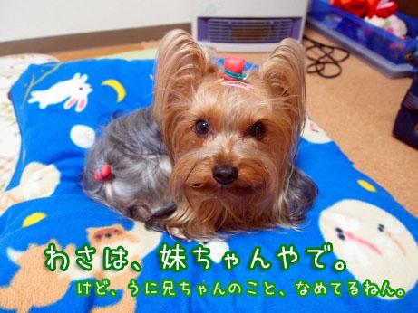 3_20100316195519.jpg