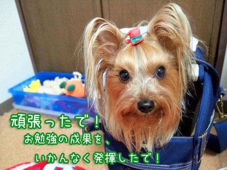 3_20100324120048.jpg