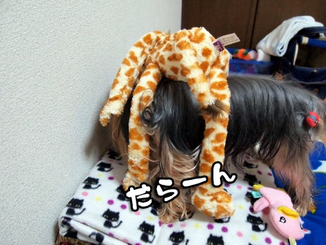 3_20100326193503.jpg