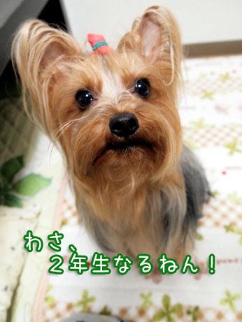 3_20100328193500.jpg